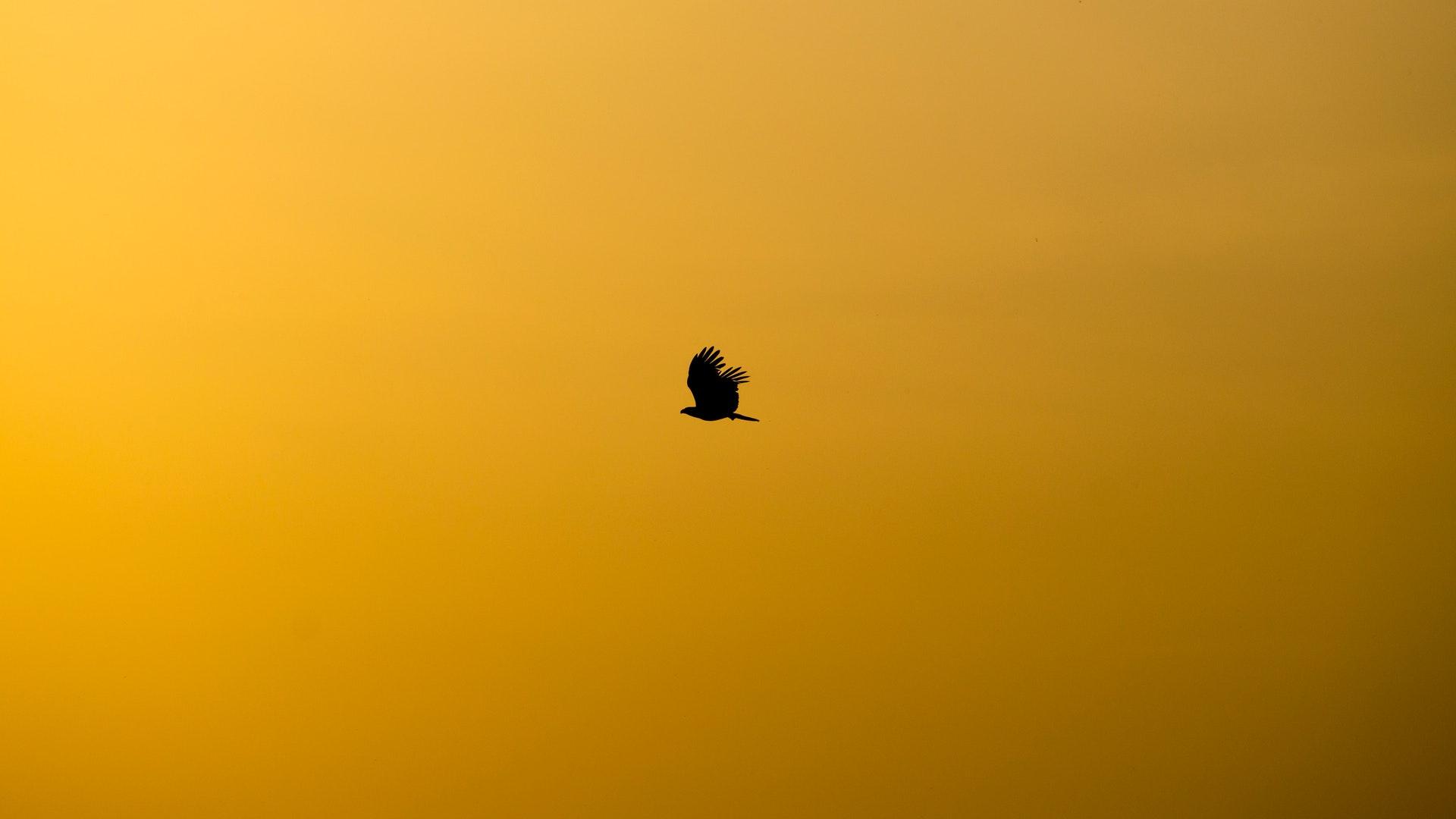 飛鷹再展翅